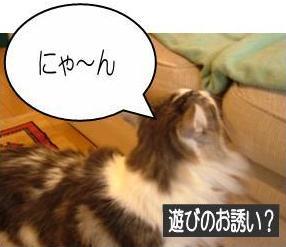 猫19-1
