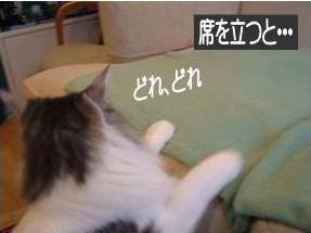 猫19-2
