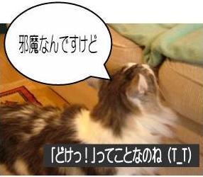 猫19-5