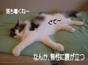 猫19-6