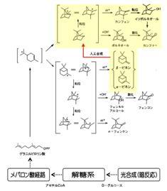 テルペン生合成