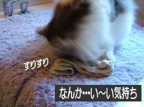 猫20-3