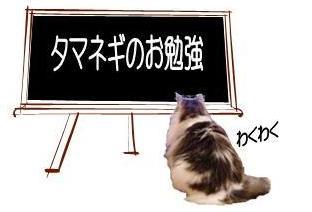 猫21-2