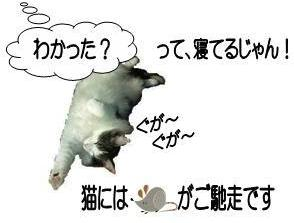 FPの家」槻岡建設 猫噺21 猫にタ...