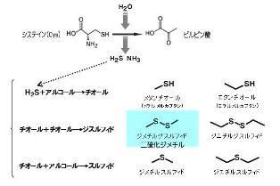含硫化合物