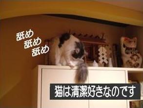 猫22-2