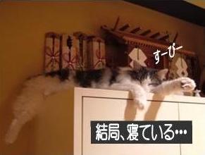 猫22-3