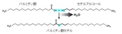 パルミチン酸セチル