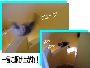 猫23-5