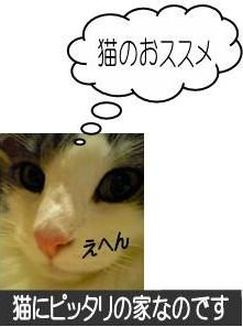 猫23-7