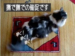 猫24-1