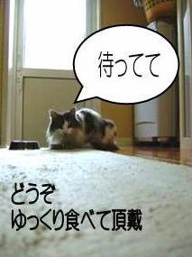 猫24-3