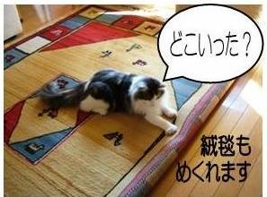 猫25-6