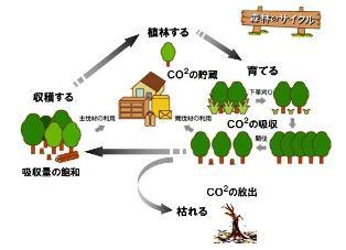 森林による二酸化炭素吸収