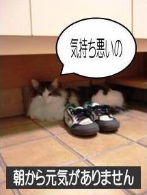 猫26-1