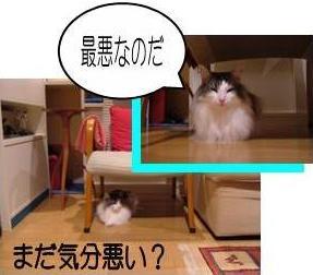 猫26-4