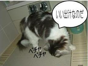 猫28-4