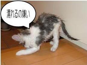 猫28-5