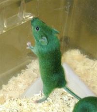 光合成するネズミ