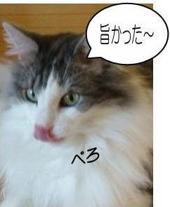 猫29-1