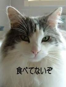 猫29-2