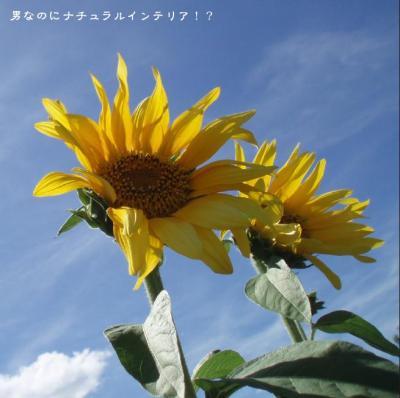 1144_convert_20110520224214.jpg