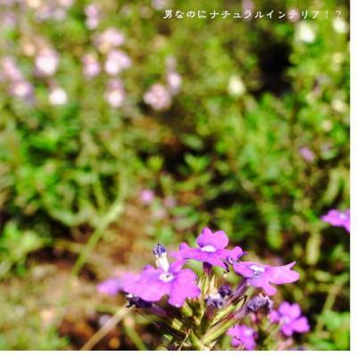 1237_convert_20110605231006.jpg