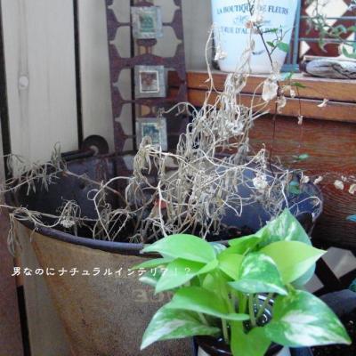 1333_convert_20110629220912.jpg
