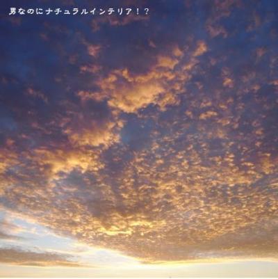 859_convert_20110215003525.jpg