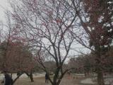 CIMG4687_20110207205750.jpg