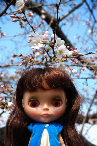 blythe & cherry blossom