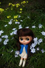 blythe,flowers