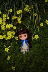 blythe,yellow flower