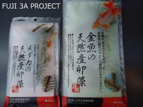 メダカ・金魚の藻