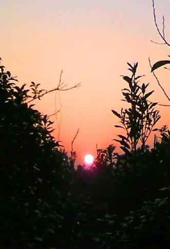 08. 秋~夕日。