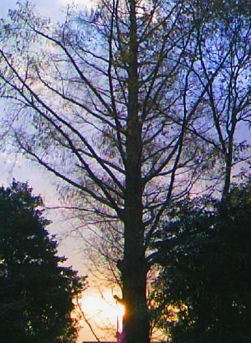 08. 秋~朝日。