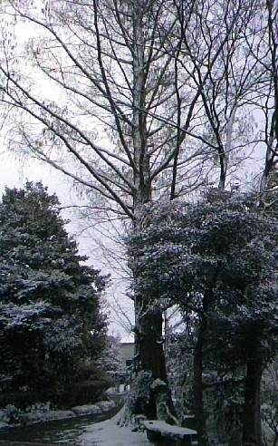 09.雪~シンボル。