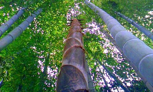 タケノコ~竹へ。。
