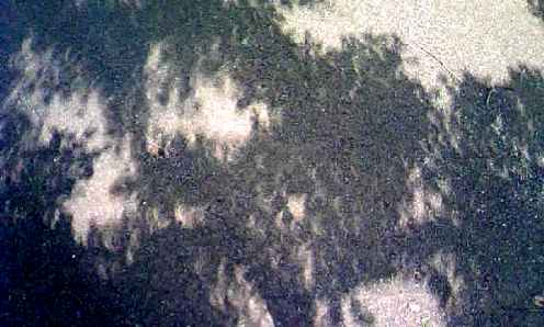 日食~影、地面I。
