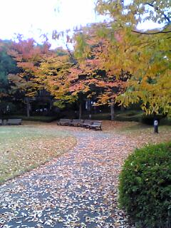 公園散歩道