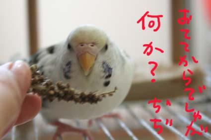 IMG_4694.jpg