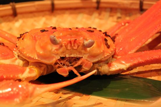 蟹さん正面
