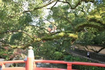 太宰府天満宮の木