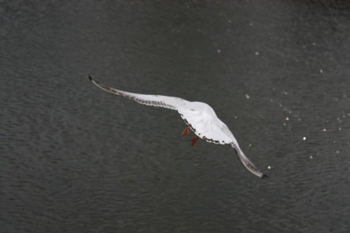 飛び立つ鳥