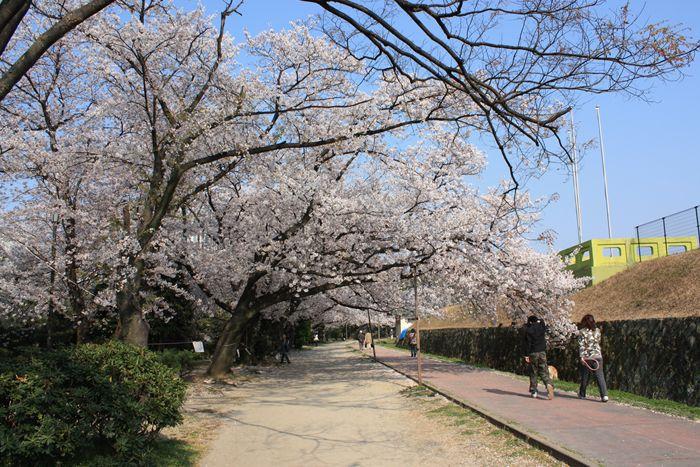 舞鶴公園・桜満開シリーズ 平和台陸上競技場周辺