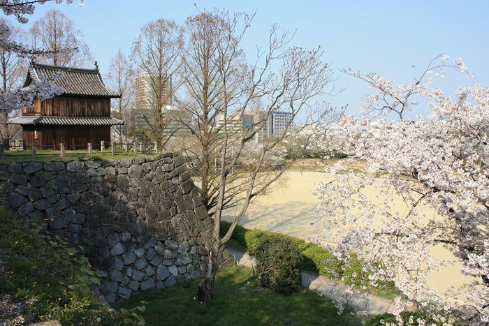 福岡城址/祈念櫓の桜
