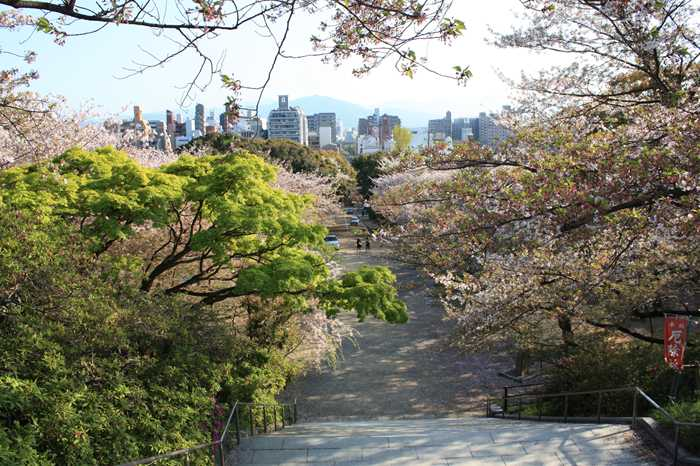 桜が散った西公園