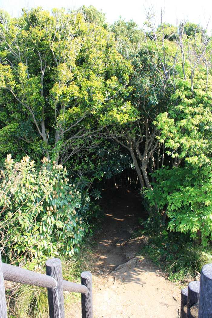 芥屋の大門の裏の展望所