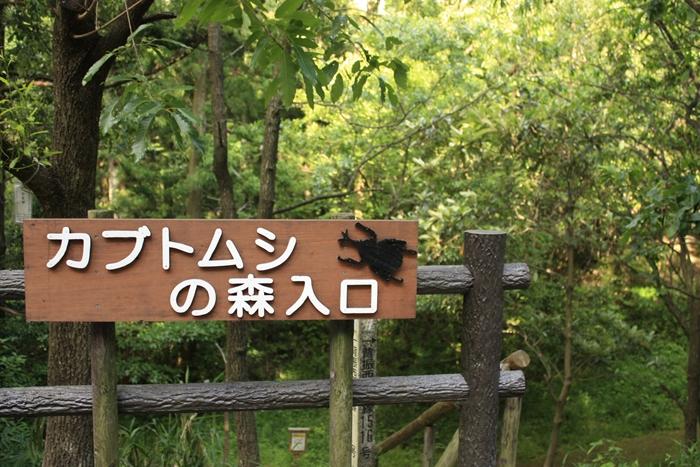 カブトムシの森