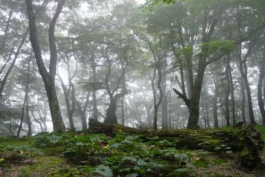 堂平の森2